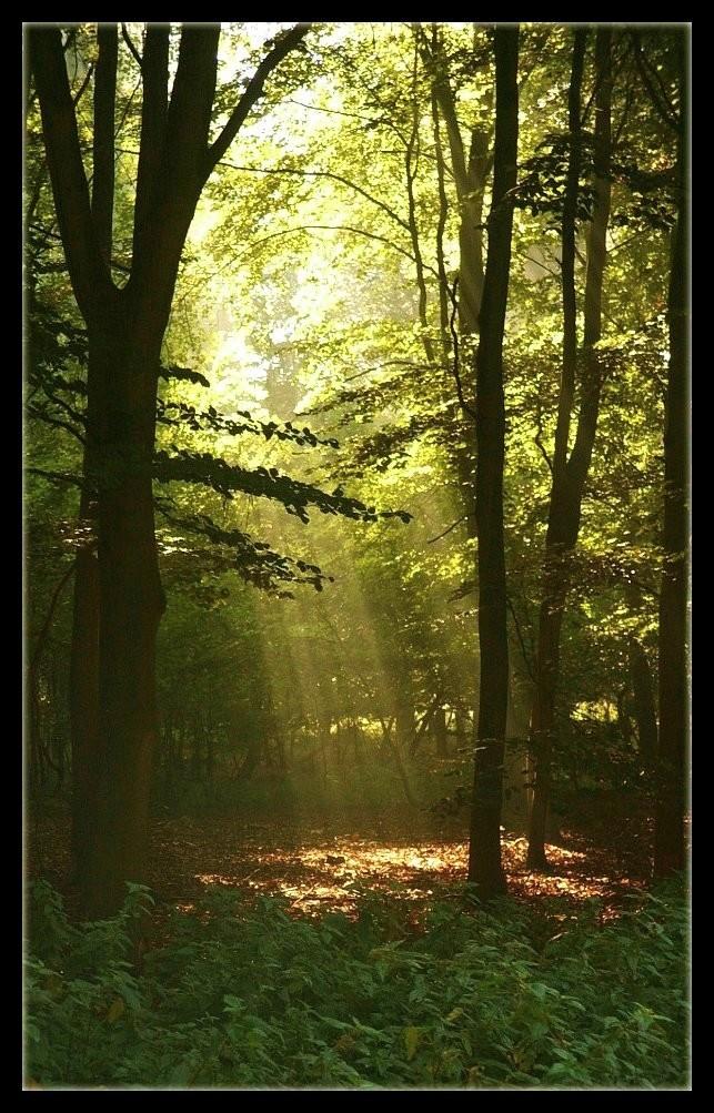 Enchanted Morning by Forestina-Fotos