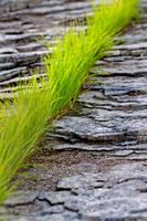 grass_2 by MadManTnT