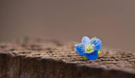 flower by MadManTnT
