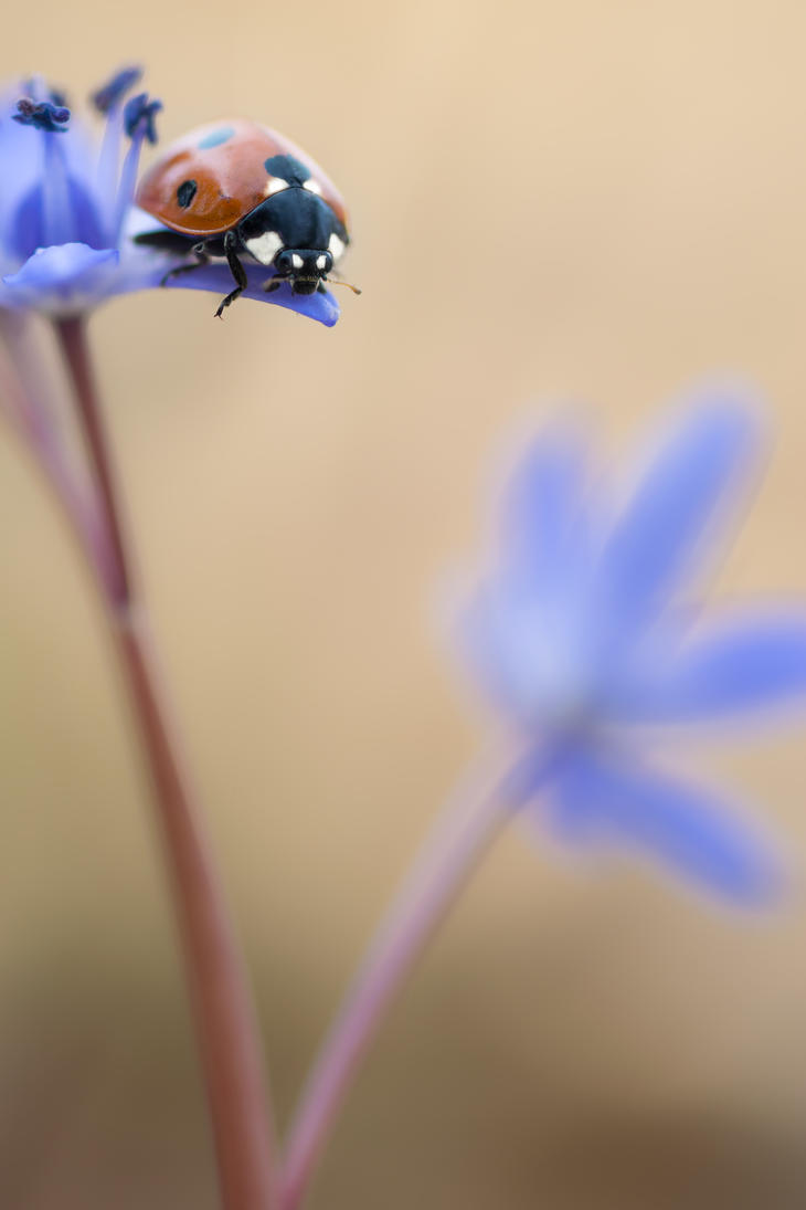 Lady Bug by MadManTnT