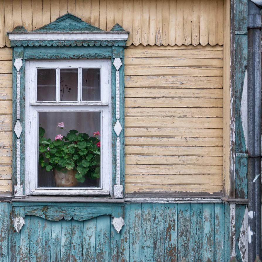 Geranium at the window