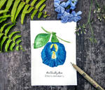 Botanical TropicalSeries BluePea 1