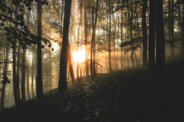 Sun - Forest - Fog by Wuddie06