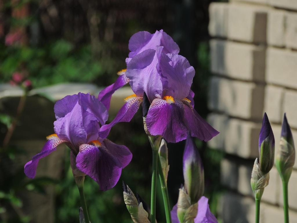 Deep Purple by PHOTOBUG51
