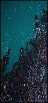 Ocean Beginnings