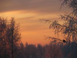Winter,,,. by MASYON