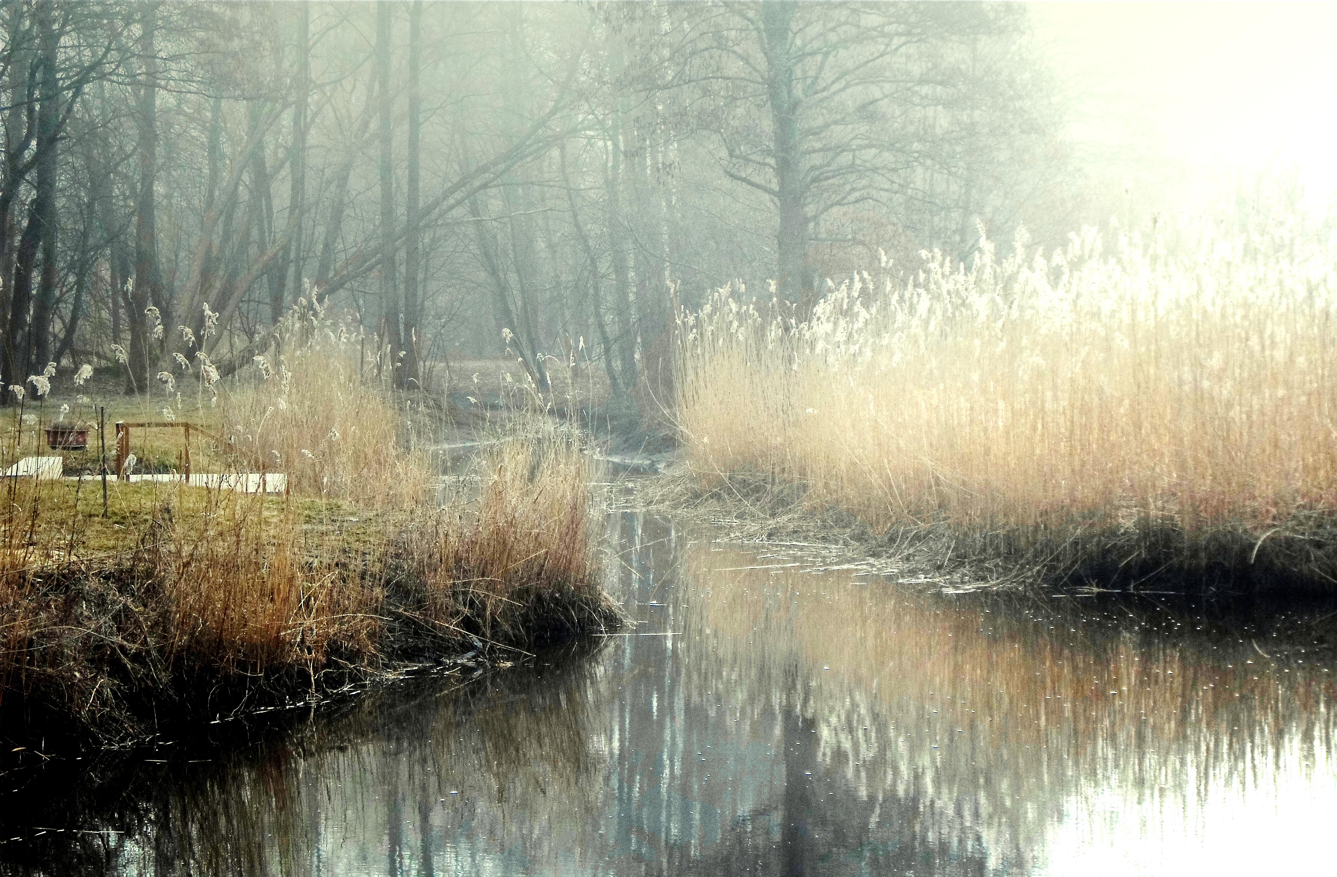 Fog 64 by MASYON