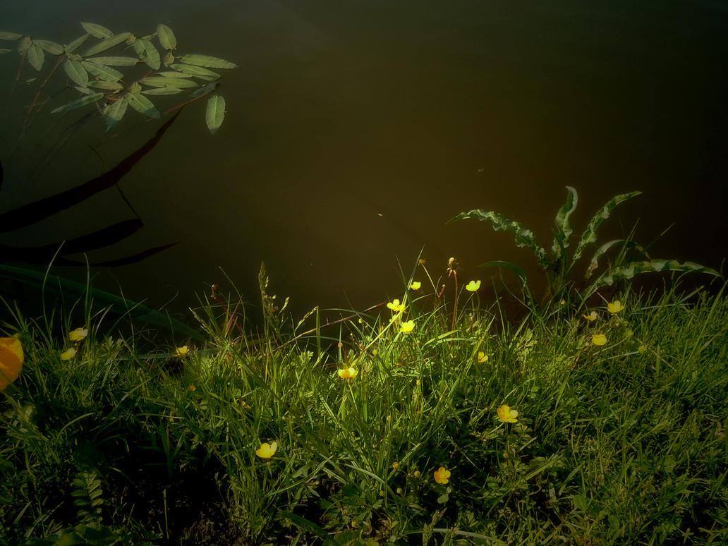 Nature 89 by MASYON