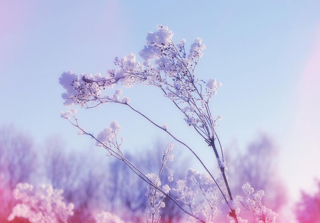 Nature 96 by MASYON