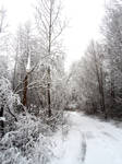 Winter forest 39