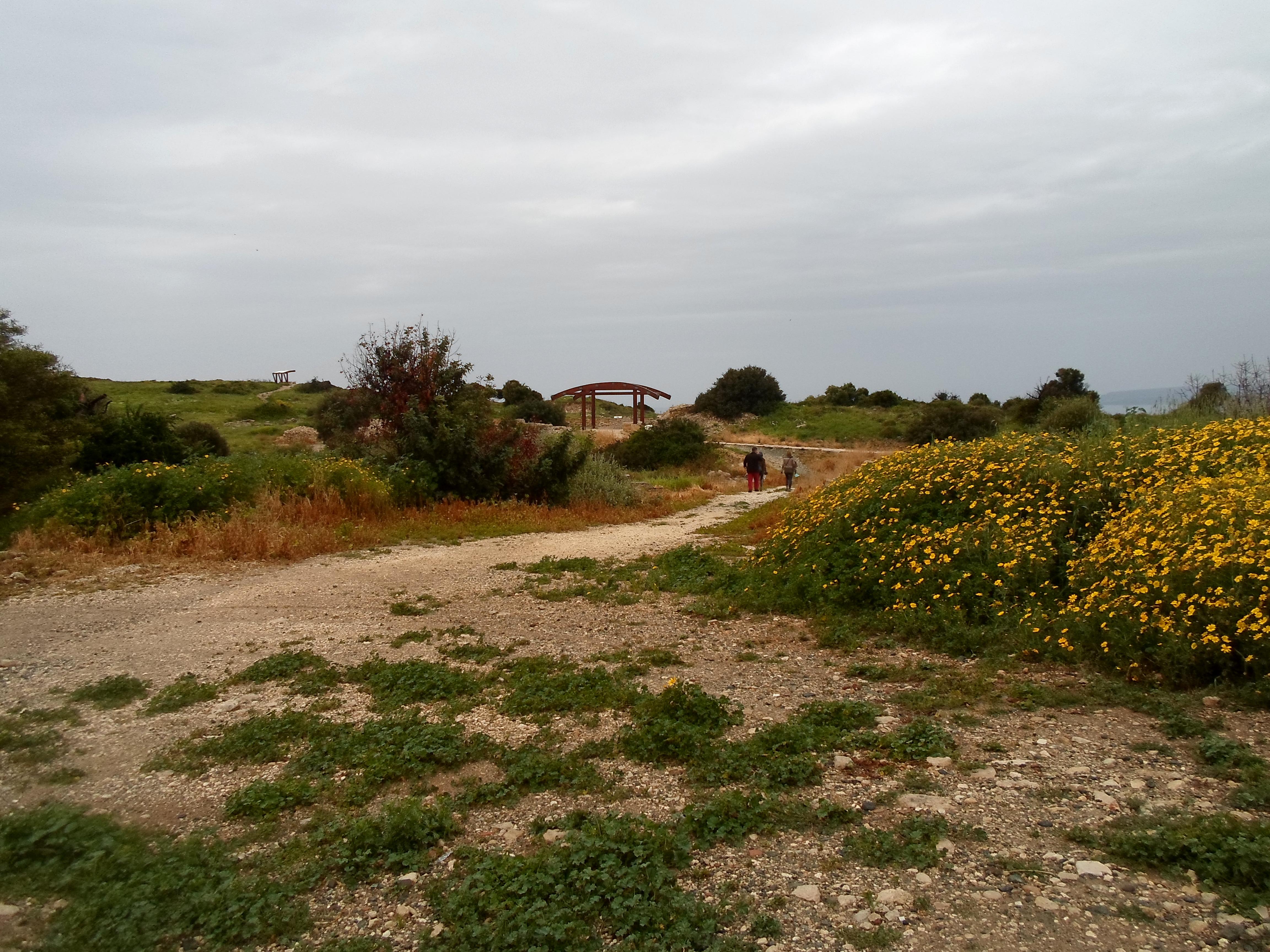 Kourion 185