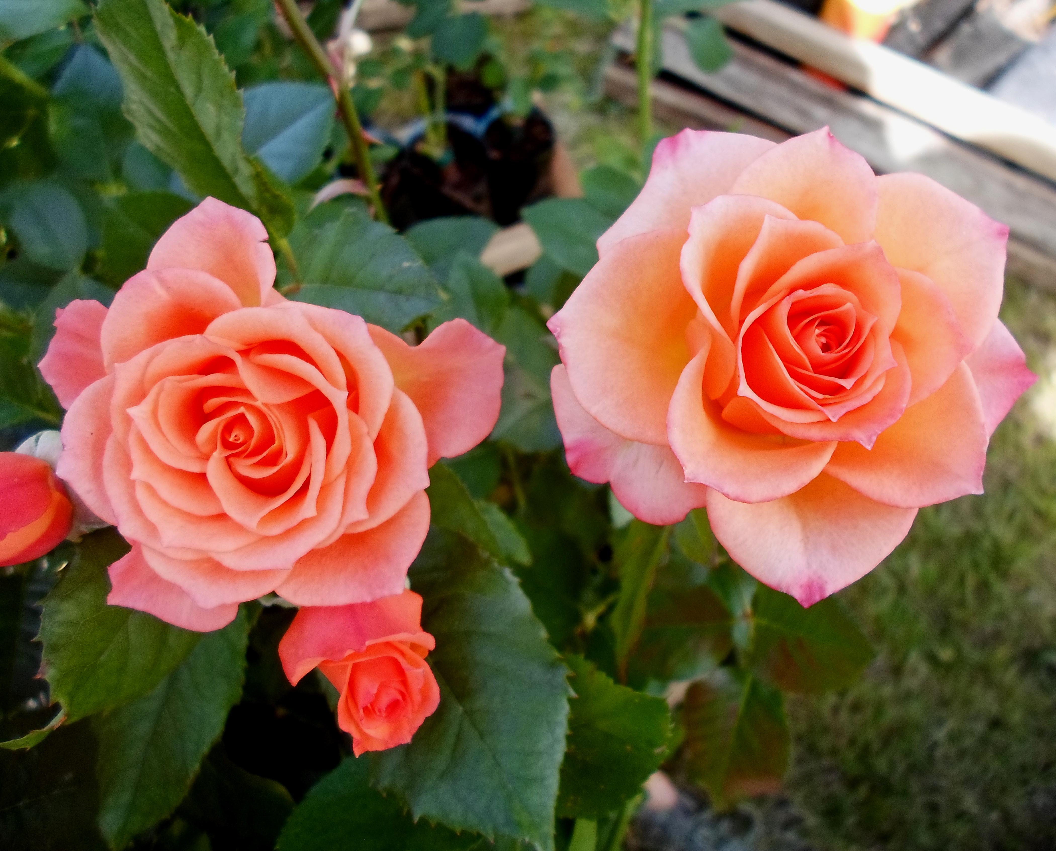 Flower 61 by MASYON