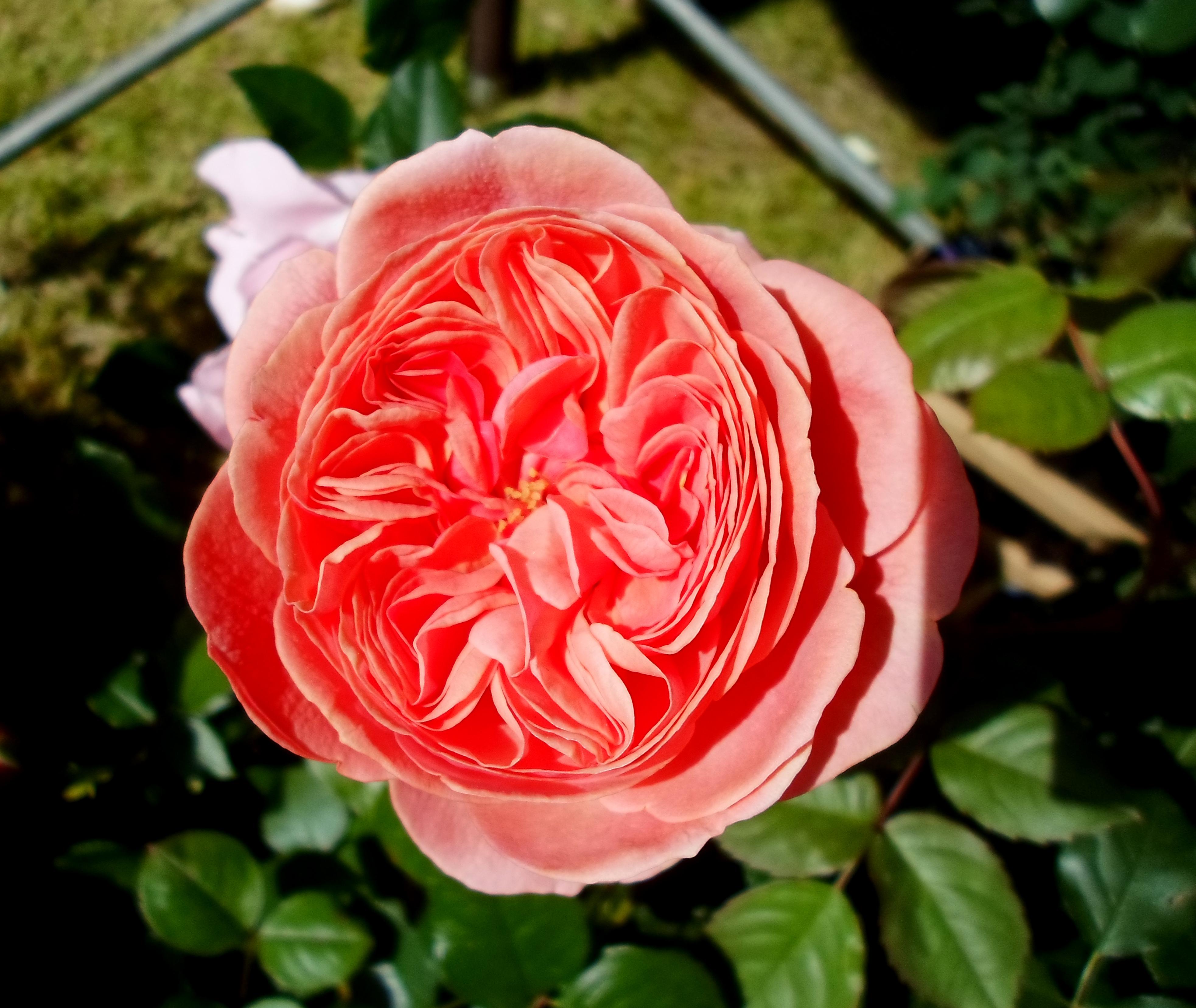 Flower 67 by MASYON