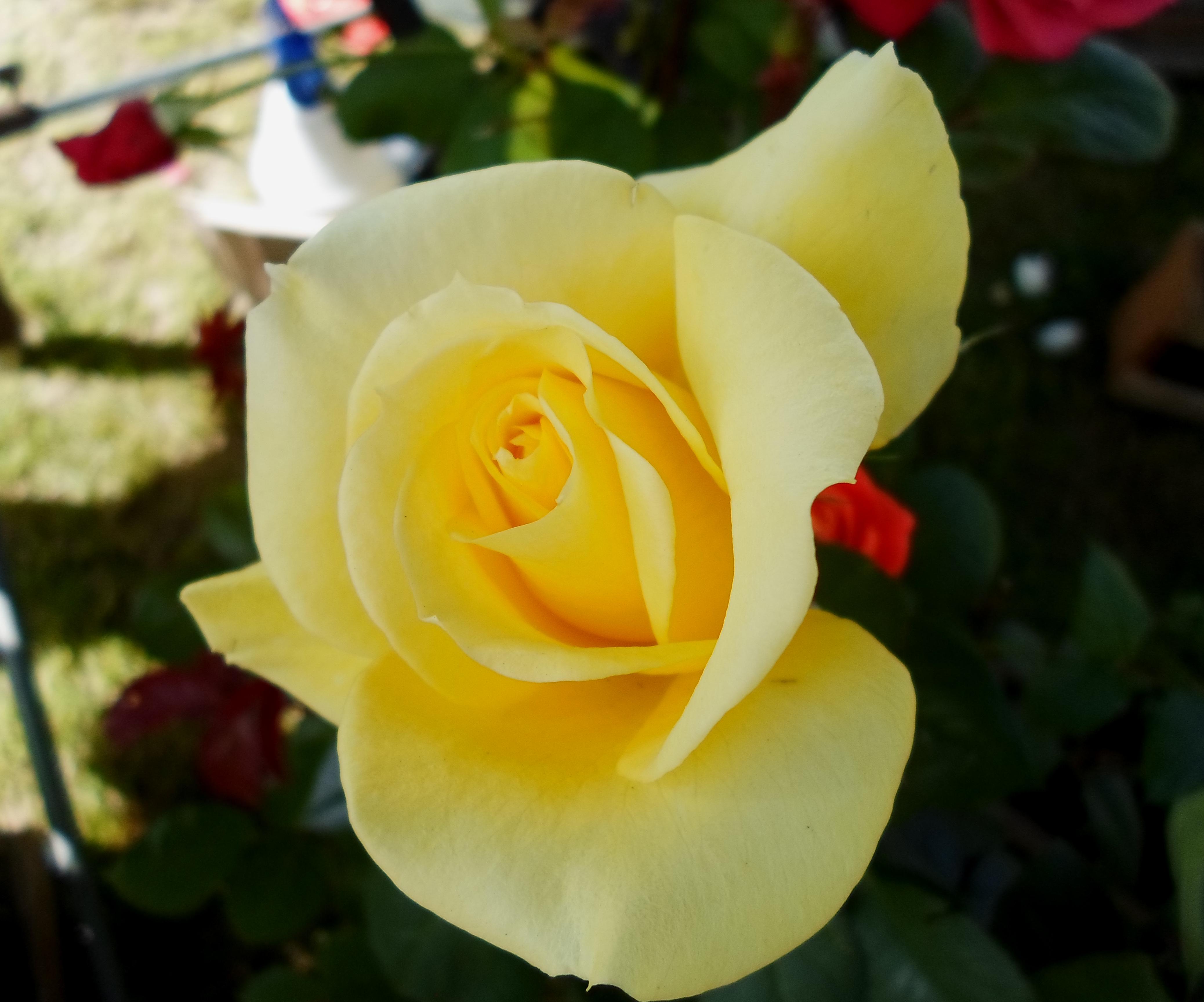Flower 68 by MASYON