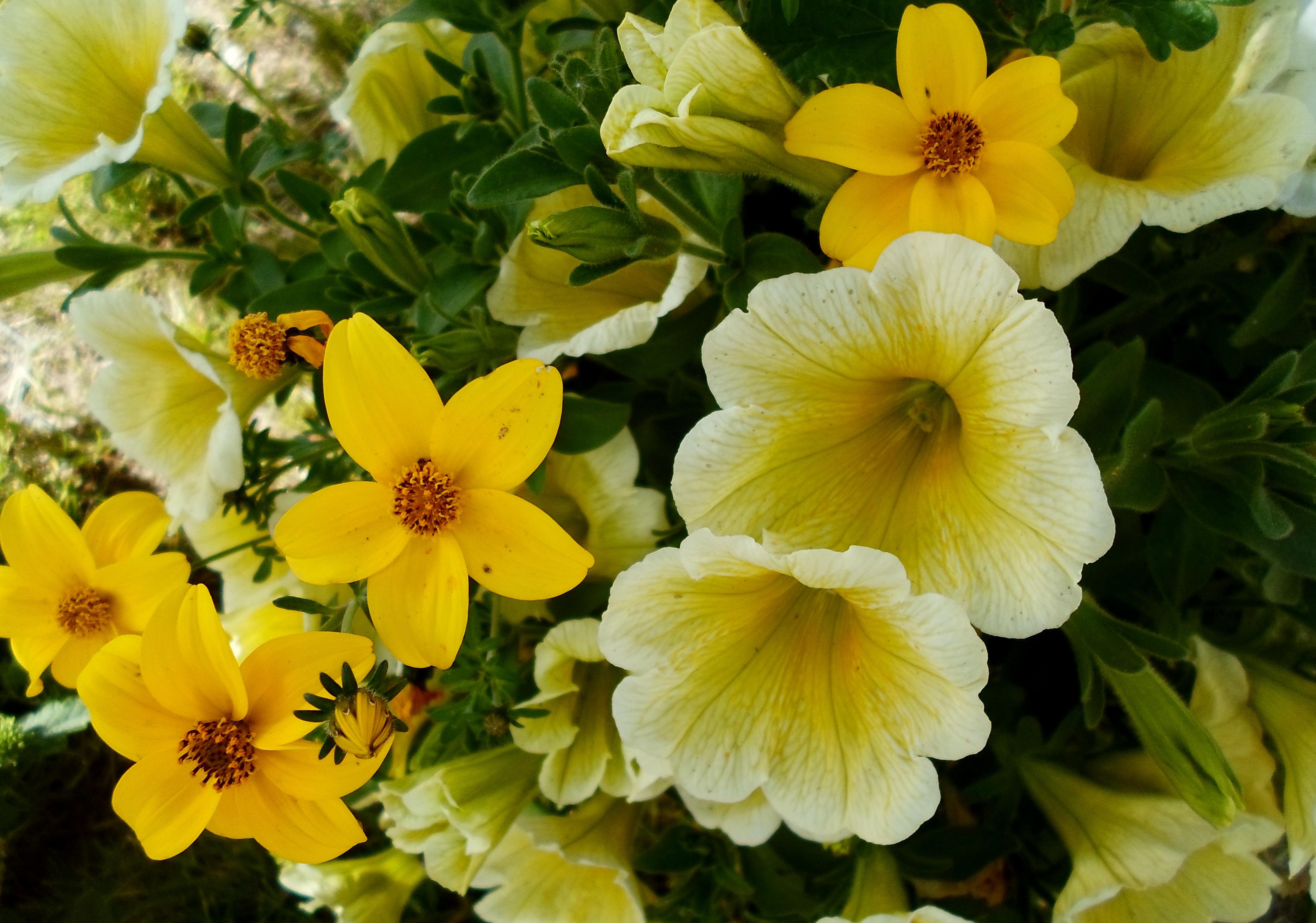 Flower 77 by MASYON