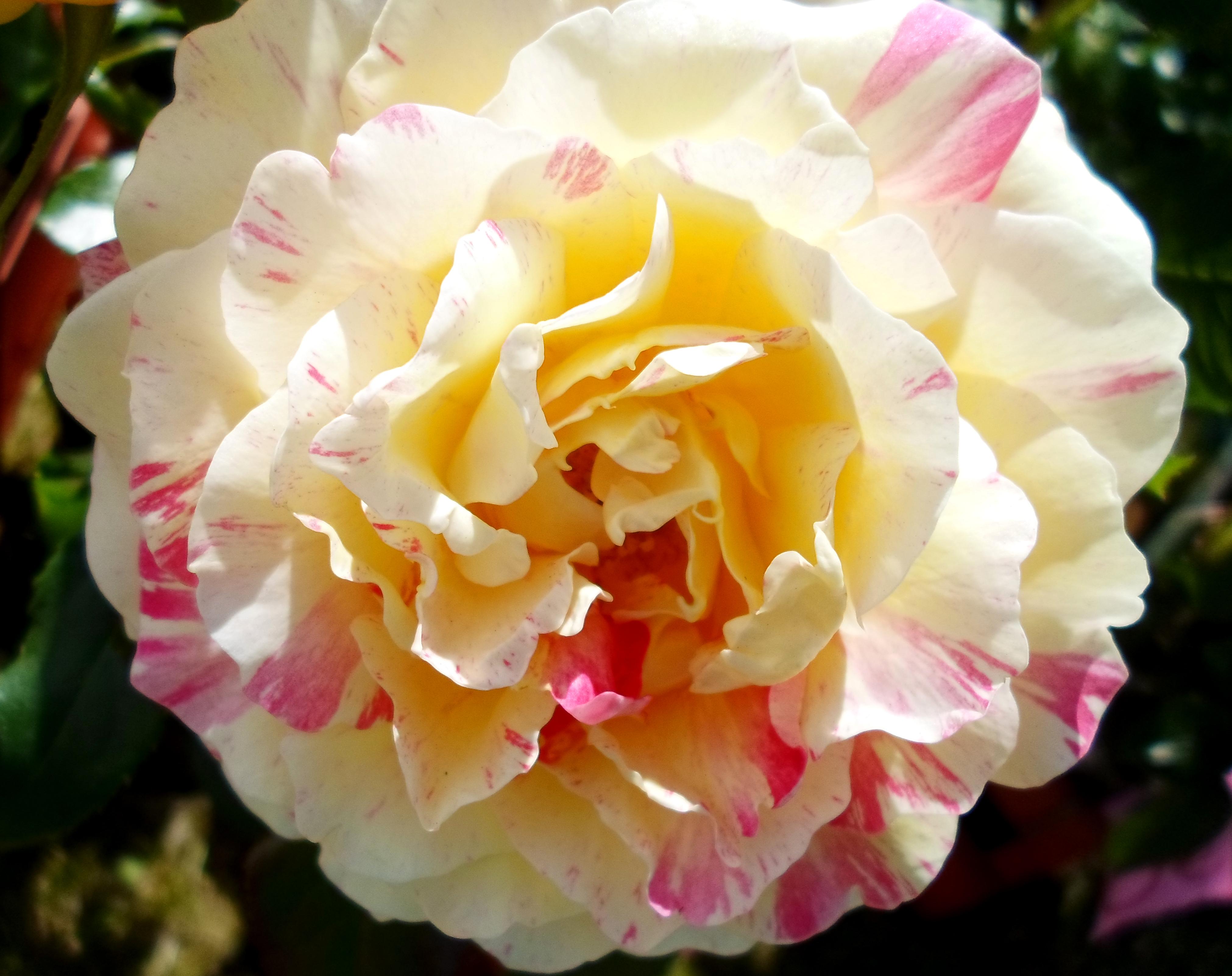 Flower 84 by MASYON