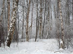 Winter forest 600