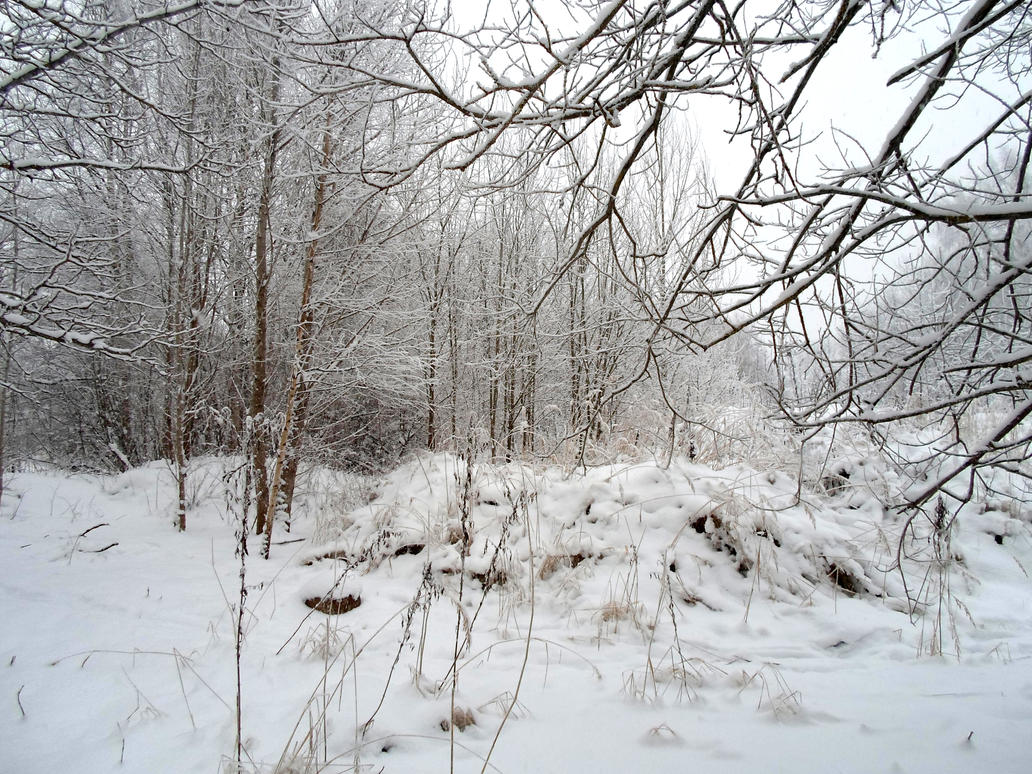 Winter forest 639 by MASYON