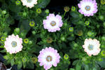 Flower 465