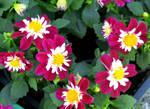 Flower 466