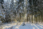 Winter forest 17