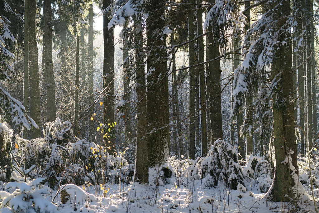 Winter forest 18 by MASYON