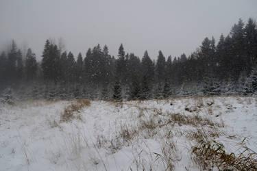 Winter 101 by MASYON