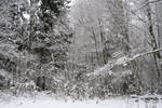 Winter forest 117