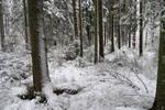 Winter 665
