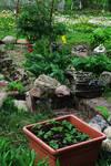 Garden 354