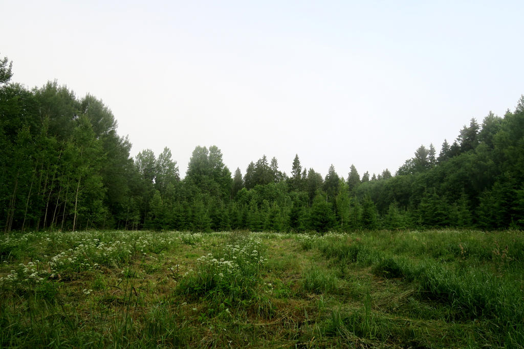 Forest 268