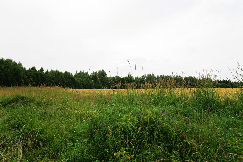 Landscapes 1014