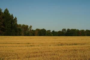 Field 308