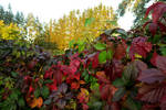 Garden 1303