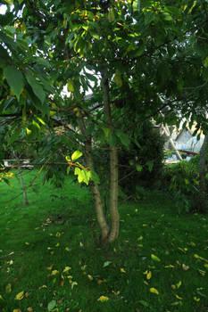 Garden 1327