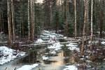 Moisakula forest 371