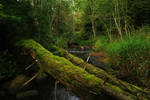 Estonian nature 28