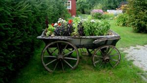 Estonian nature 109
