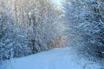 Estonian nature 269