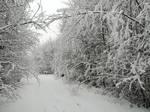 Moisakula winter forest 639