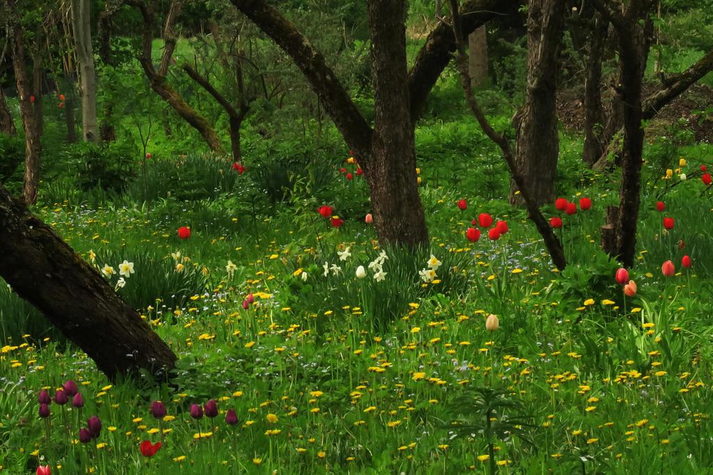 Spring 213 by MASYON