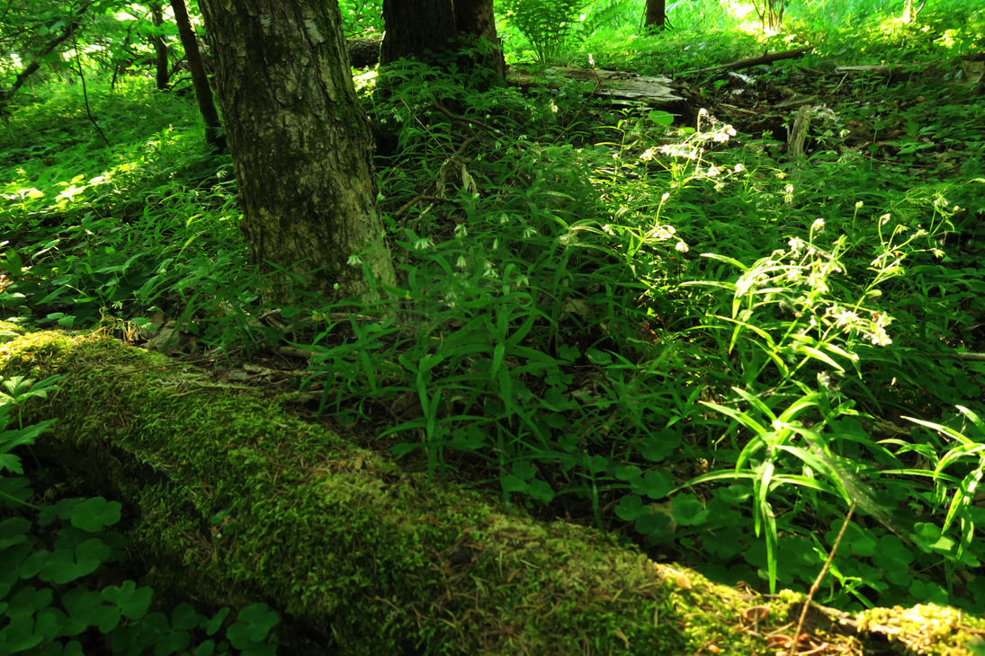 Spring forest 28 by MASYON