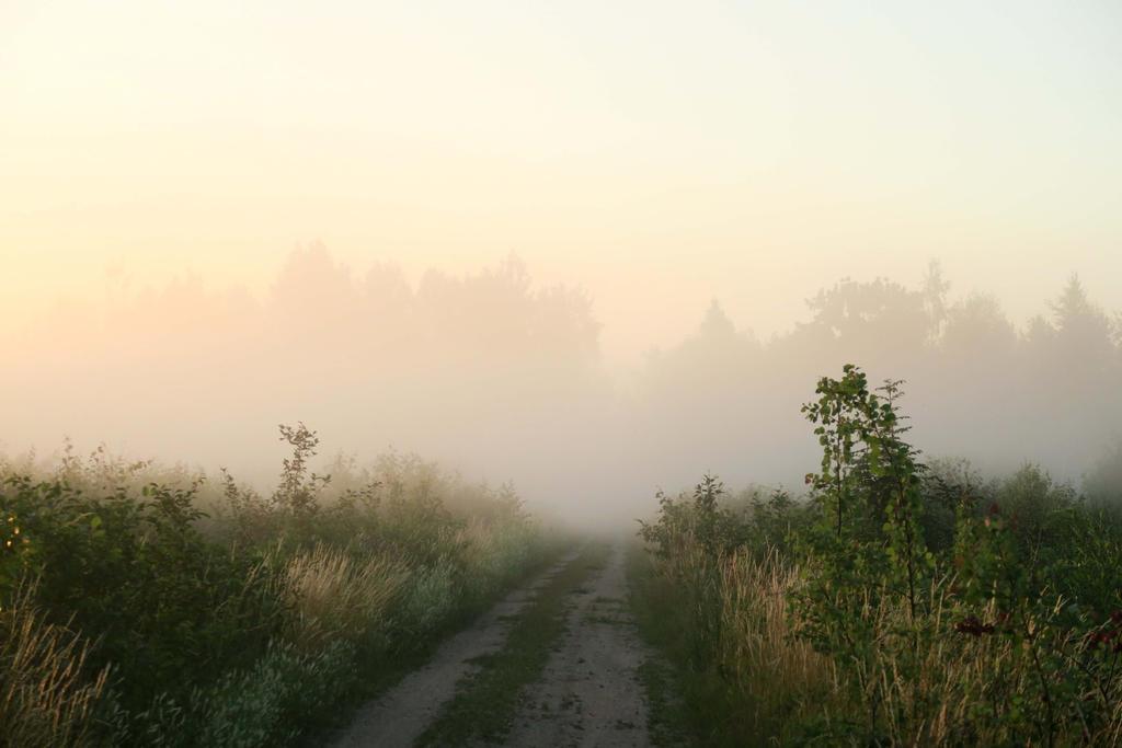 Fog in Moisakula 14