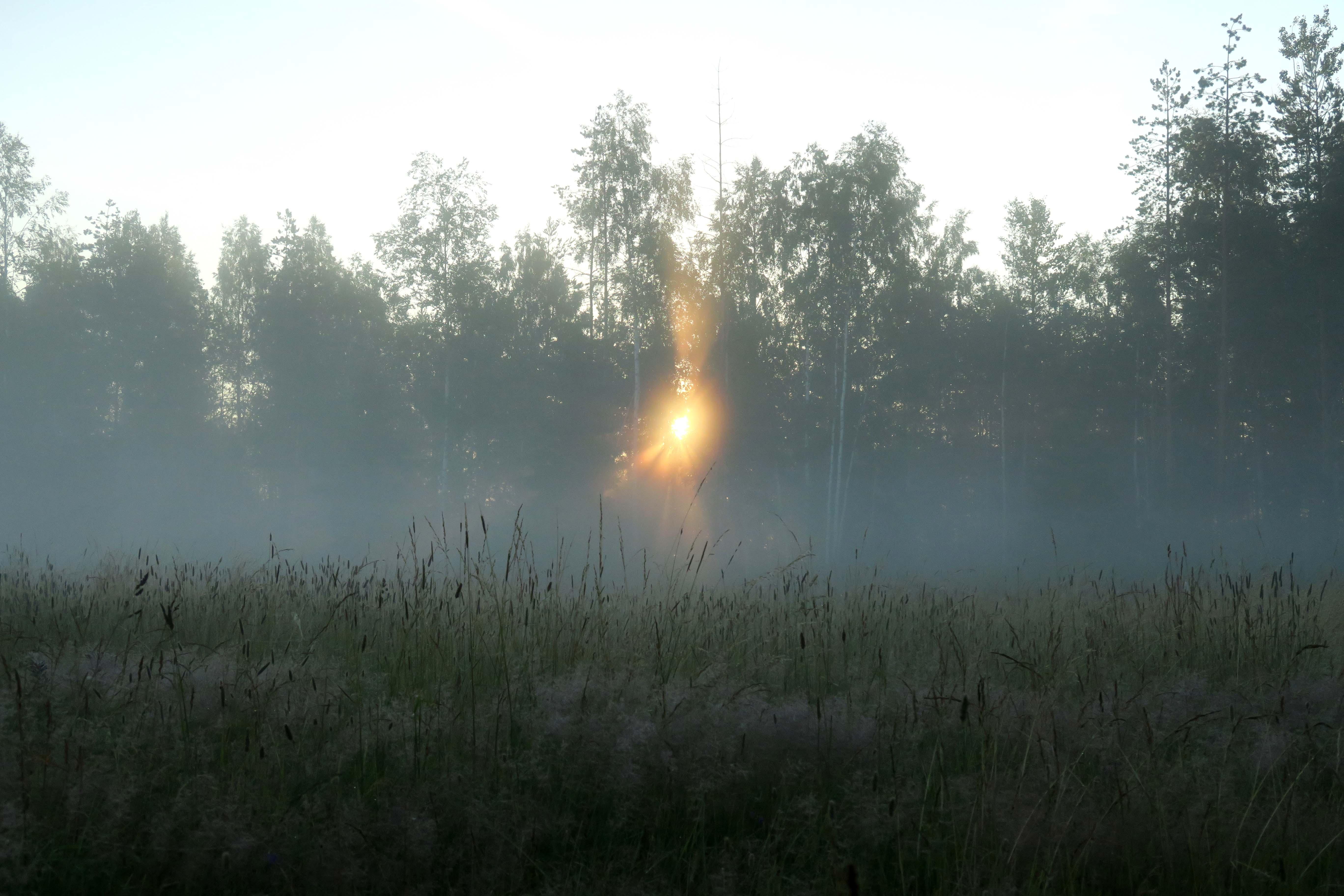 Fog in Moisakula 75