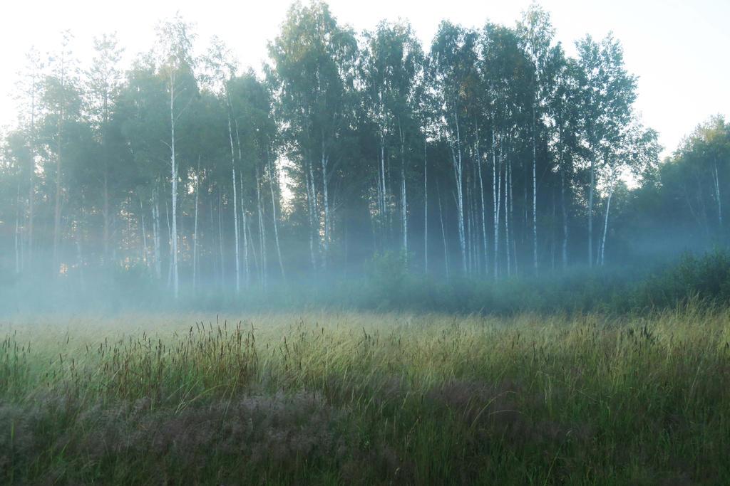 Fog in Moisakula 81