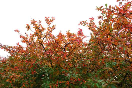 Autumn 506