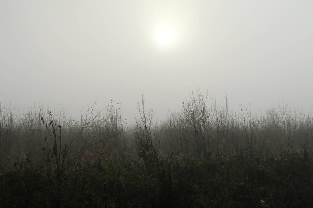 Autumn fog 320 by MASYON