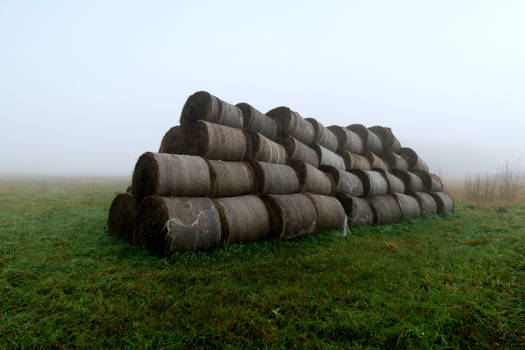 Autumn fog 400