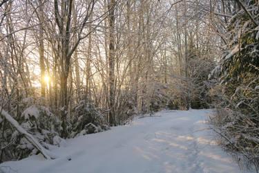 Winter 349