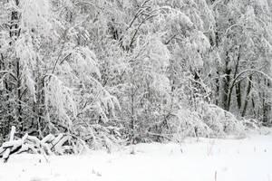 Winter 282 by MASYON